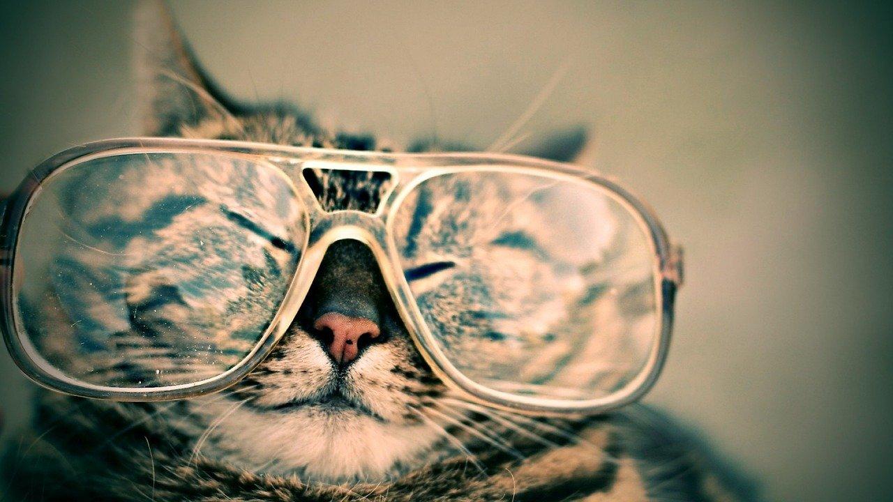 Warum riechen Katzen so gut Katze mit Brille